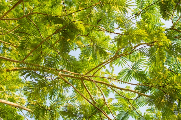 Background of green leaves tree
