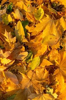 배경 그룹가 오렌지 잎.