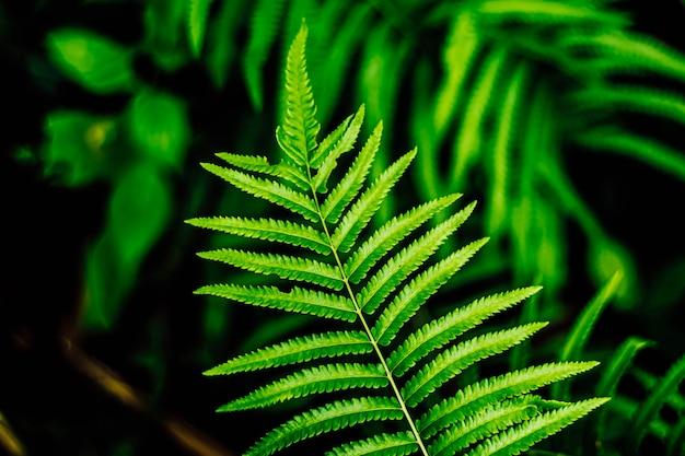 シダの葉クローズアップ自然概念アイデアbackground.house装飾.gardeningコンセプトアイデア