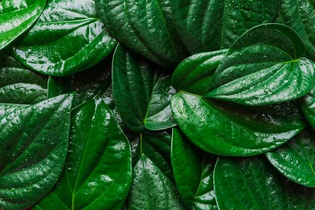 녹색 잎으로 덮인 배경 이미지