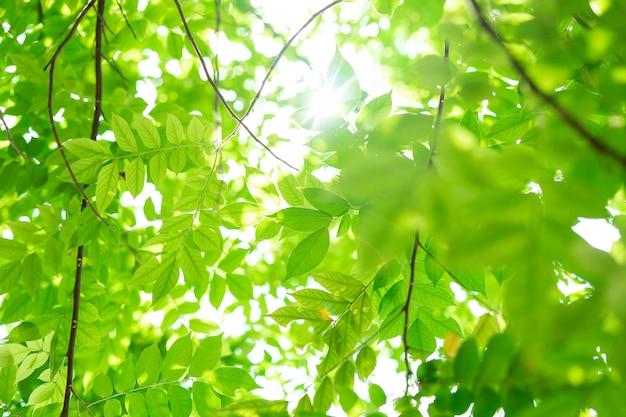 태양에 녹색 잎의 배경 이미지