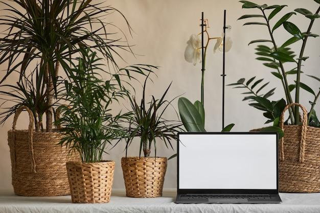 Фоновое изображение открытого ноутбука с пустым белым экраном на столе, украшенном зелеными растениями в эко ...