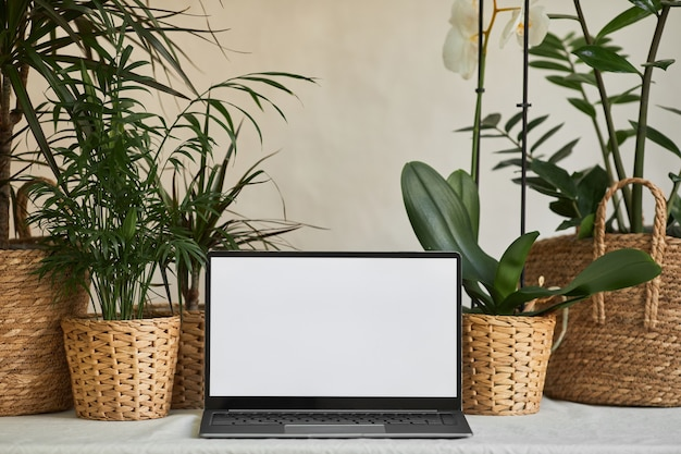 Фоновое изображение открытого ноутбука с пустым белым экраном на desl, украшенном зелеными растениями в эко ...