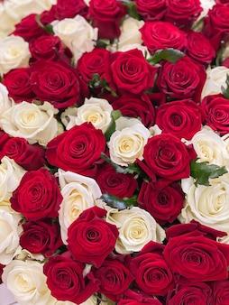 赤いバラと白いバラの背景画像。ロマンチックなホリデーギフトのための花の大きな花束。 101本のバラ