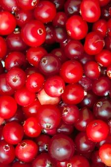 熟した赤いクランベリー、ベジタリアン料理、健康食品の背景画像