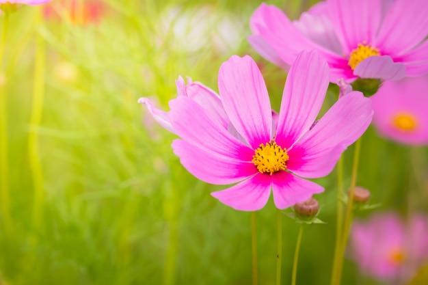 カラフルな花の背景画像