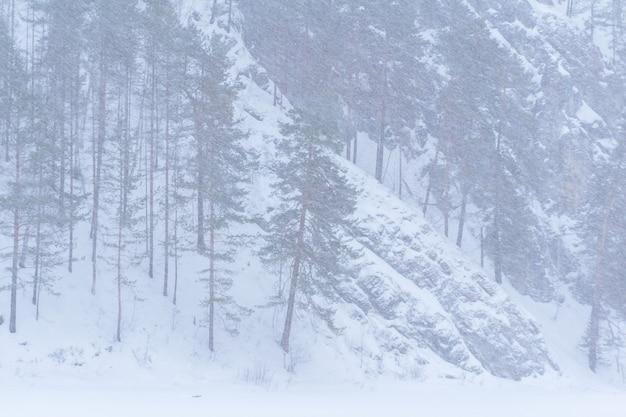 눈 폭풍 동안 배경 풍경 산 소나무 숲