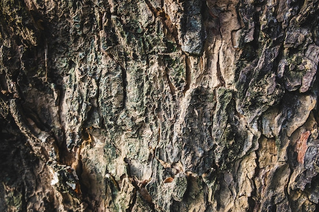 Background of large tree bark