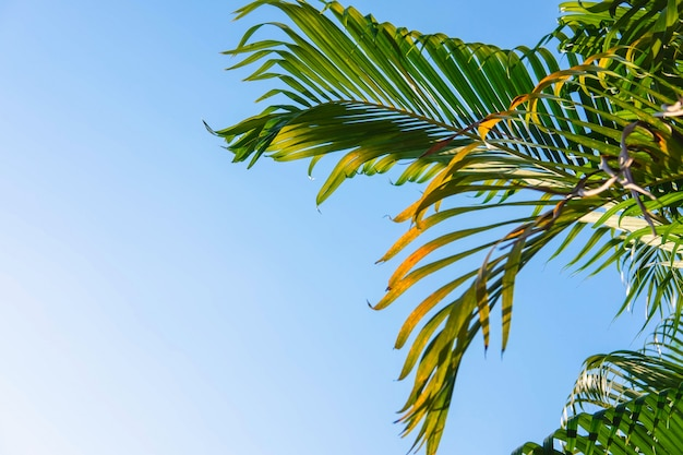The background leaves of palm trees and the sky summer concept