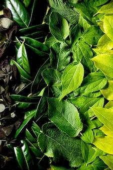 다른 녹색 및 빨강 잎, 녹색 그라데이션 만든 배경. 공간을 복사하십시오. 자연 창의적인 레이아웃, 평면도, 평면 배치