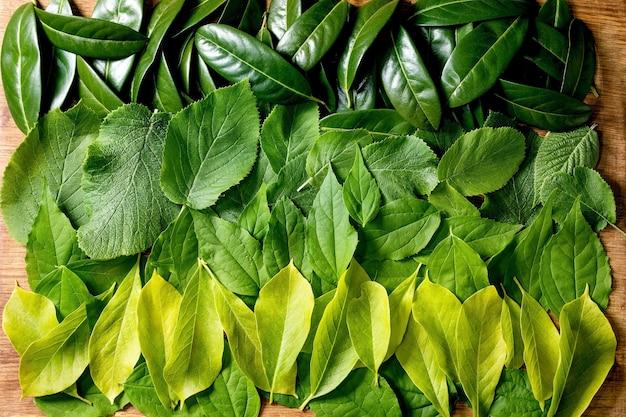 행, 녹색 노란색 그라데이션에서 다른 녹색 잎의 배경. 공간을 복사하십시오. 자연 창의적인 레이아웃, 평면도, 평면 배치. 녹색 생활 개념