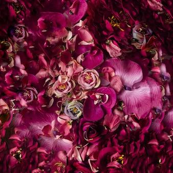 분홍색과 보라색 꽃과 꽃잎의 배경.
