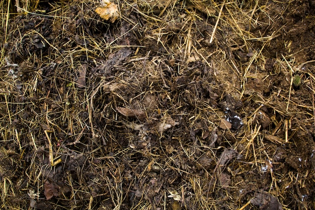 Background of manure. .