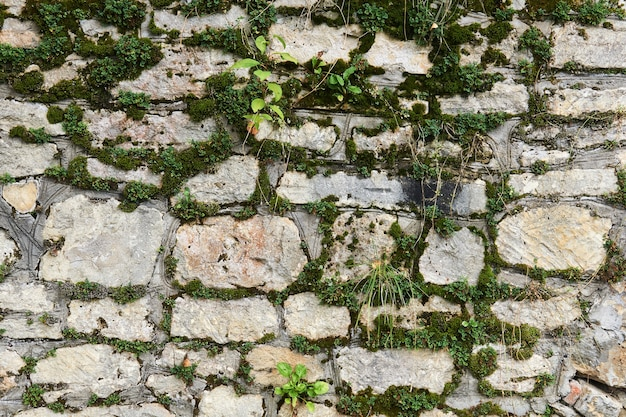 Background - mossy wall made of raw limestone