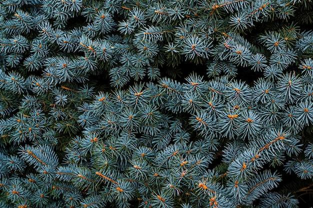 背景自然なトウヒの枝のクローズアップ水平写真。