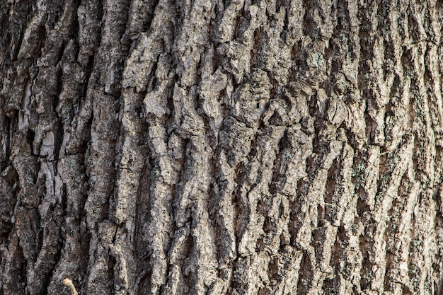 Background of natural tree bark