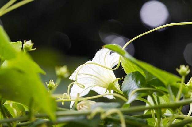 Фон природа белый цветок овощ с листиком