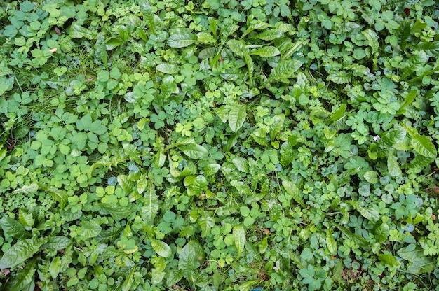 Фон поляны зеленой густой различной травы горизонтальной ориентации