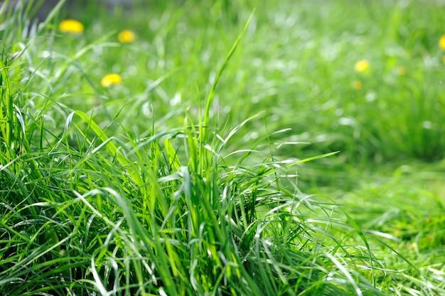 정원에 있는 푸른 잔디의 배경