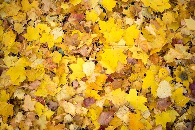 Фон из осенних листьев детали разного цвета