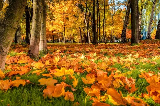 Фон из осенних листьев на земле