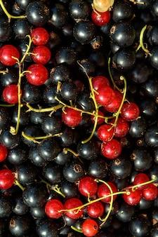 あなたの庭で集められた黒赤と黄色のスグリの背景生態学的製品