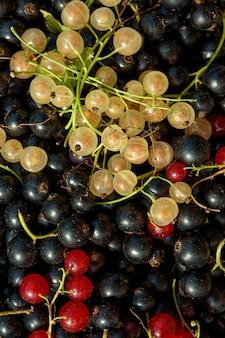 あなたの庭で集められた黒、赤、黄色のスグリの背景。エコロジー製品。