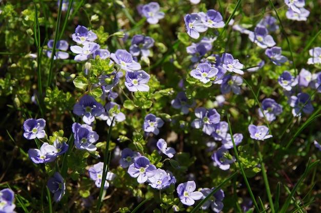 緑の草の青い牧草地の花の背景夏の野花クローズアップ