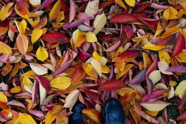 밝은 가을 잎의 배경은 복사 공간이 있는 가로쉬를 입은 발의 지상 꼭대기 전망에 떨어졌습니다...