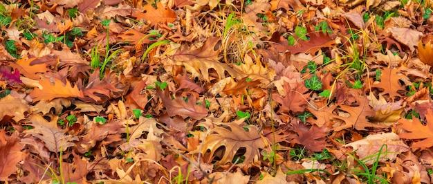 Фон из коричневых сухих осенних опавших листьев платана