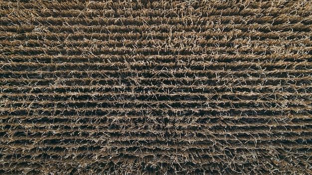 トウモロコシ畑の航空写真の背景