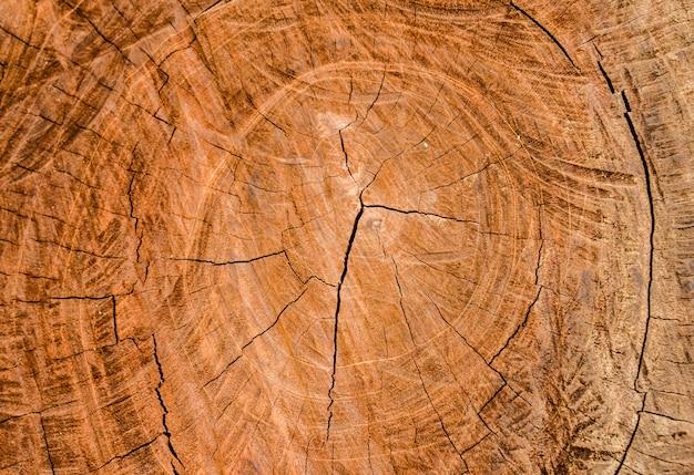 절단 나무의 배경