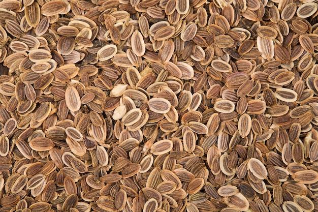 Фон из семян укропа