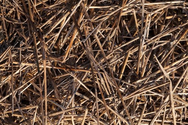 더미에 쌓인 마른 노란 잔디의 배경