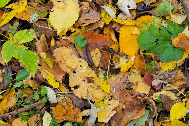 Фон из опавших сухих листьев
