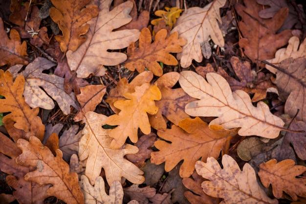 秋の落ち葉の背景。