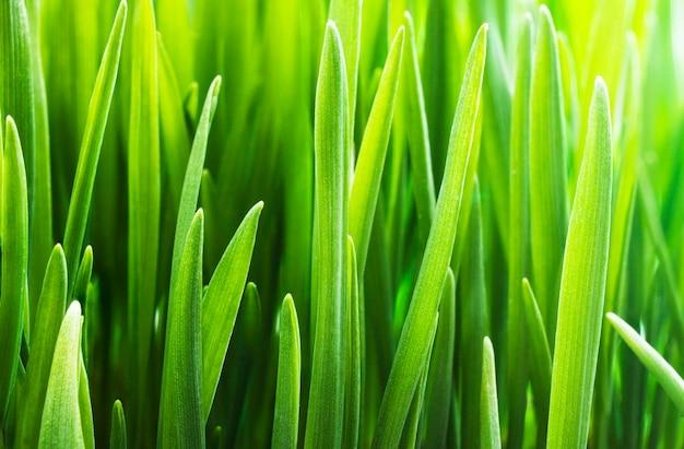 新緑草の背景