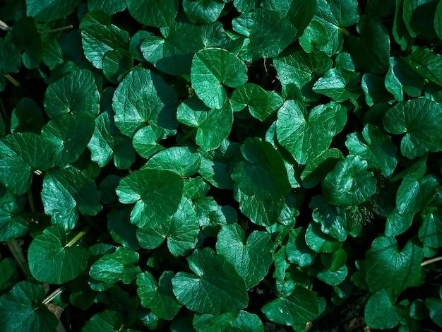 新緑の葉っぱの背景。