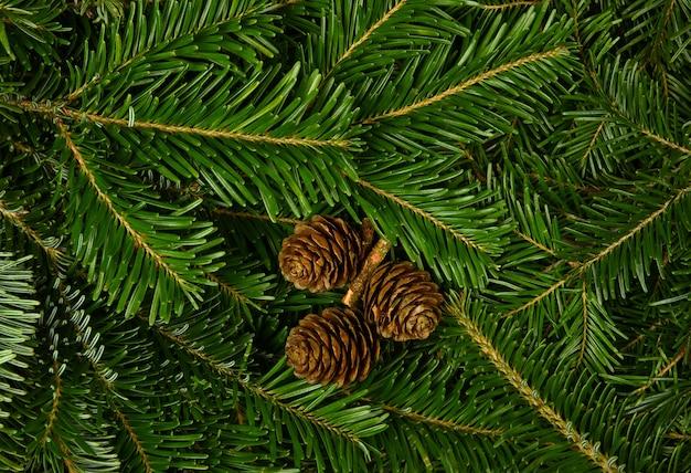 갈색 원뿔이 있는 신선한 녹색 가문비나무 또는 소나무 가지의 배경
