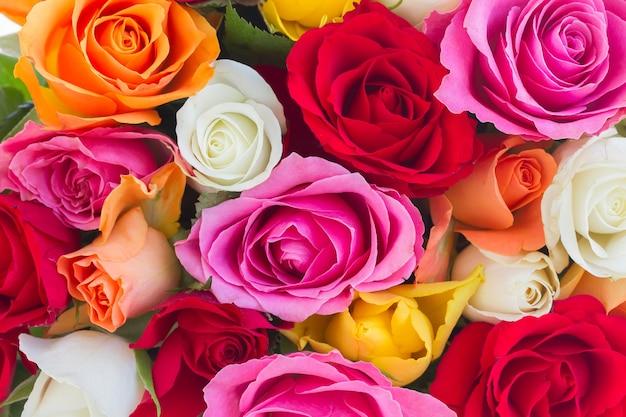 신선한 분홍색, 노란색, 주황색, 빨간색 및 흰색 신선한 장미의 배경