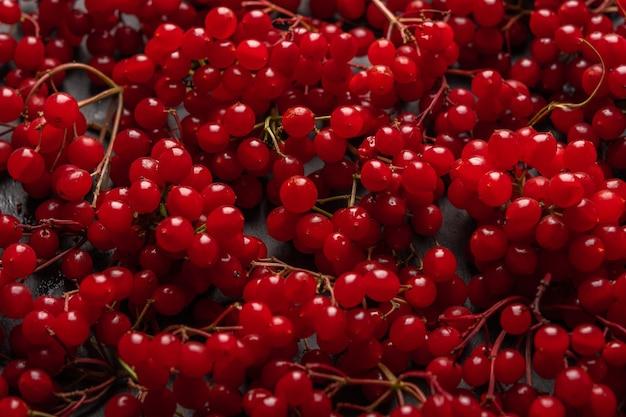 ガマズミ属の木の健康食品の新鮮な赤い果実の背景