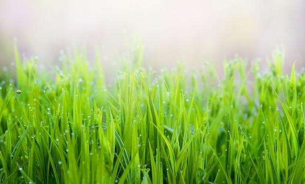 背景をぼかした写真に穏やかな明るい緑の春の草の背景