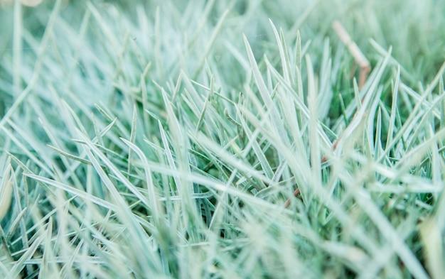 草の葉の背景。草のクローズアップ。自然な風合い。自然の美しさ。