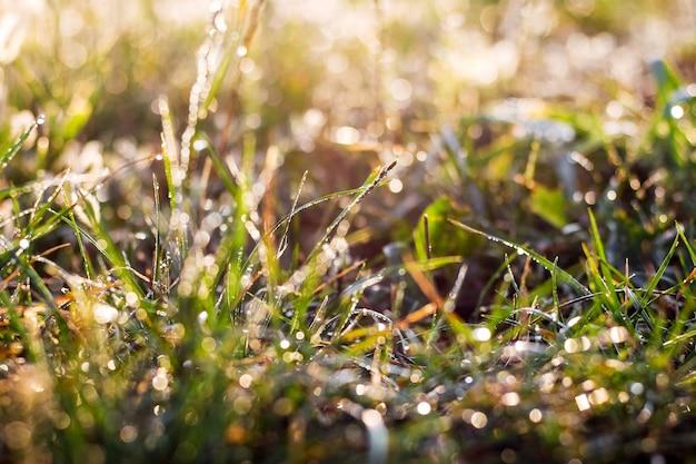 太陽に対して輝く露の草の背景