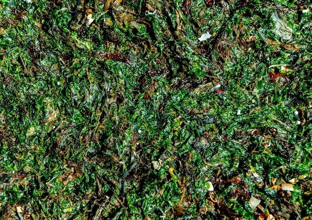 海岸に打ち上げられた緑の新鮮な海藻の背景。