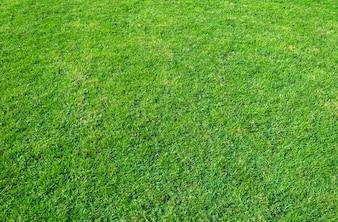 緑の芝生のフィールドの背景。緑の芝生のパターンと質感。