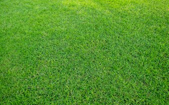 Background of green grass field.
