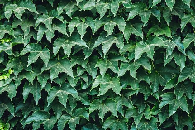 겉의 녹색 잎의 배경입니다.