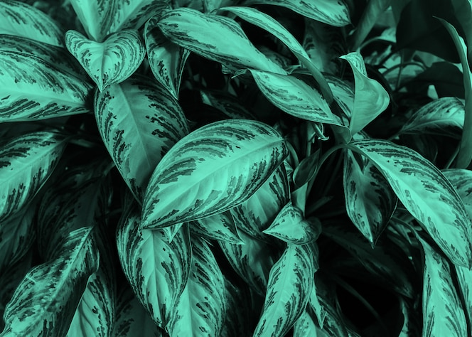 Фон из зеленых листьев тропических растений. концепция. естественный естественный фон. копировать пространство неоновая мята тонировка