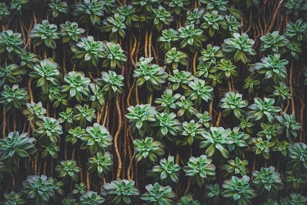 Фон из зеленых суккулентов